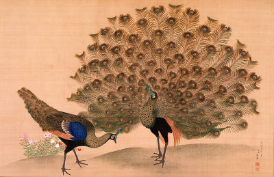 400pxokyo_peacock_and_peahen_2